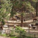 Pferderange, Okanagen