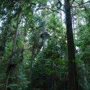 Regenwald, Vancouver
