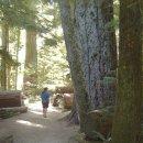 Ein Erlebnis! Regenwald, MacMillan PP