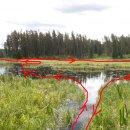 der letzte See war ziemlich zugewachsen, unsere Paddelroute